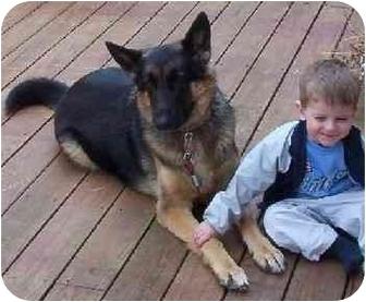 German Shepherd Dog Dog for adoption in Naugatuck, Connecticut - Mac