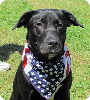 Labrador Retriever Mix Dog for adoption in Port St. Joe, Florida - Rory