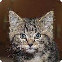 Adopt A Pet :: Royal - Medina, OH