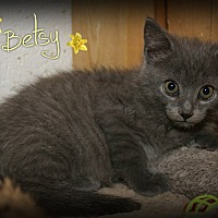 Adopt A Pet :: Betsy - Shippenville, PA