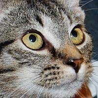 Adopt A Pet :: Rocco - Salem, WV