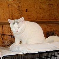 Adopt A Pet :: Rosemary - Brainardsville, NY