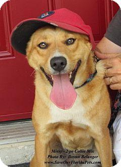 Collie/Corgi Mix Dog for adoption in Eustis, Florida - Missy