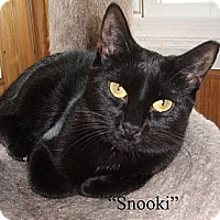 Adopt A Pet :: Snooki - Germansville, PA