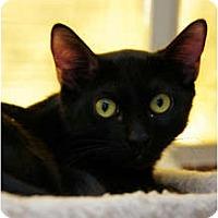 Adopt A Pet :: Kramer - Scottsdale, AZ