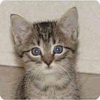 Adopt A Pet :: LADY BUG - KANSAS, MO