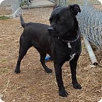 Adopt A Pet :: Nikita - Franklin, KY