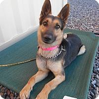 Adopt A Pet :: Mady - Phoenix, AZ