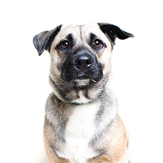 Shepherd (Unknown Type) Mix Dog for adoption in Wilmington, Delaware - Serena