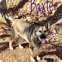 Adopt A Pet :: Baxter - Thompson, PA