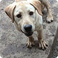 Adopt A Pet :: Levi - Evergreen, CO