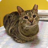 Adopt A Pet :: Raymond - Brooklyn, NY