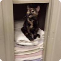 Adopt A Pet :: Piper (Petsmart FH) - Trenton, NJ