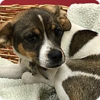 Adopt A Pet :: Sky - Decatur, AL