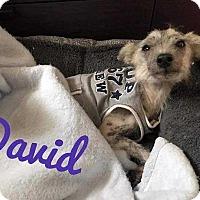 Adopt A Pet :: David - Allen, TX