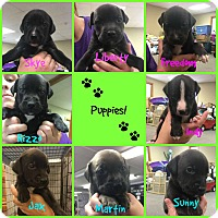 Adopt A Pet :: Puppies! - Fort Wayne, IN