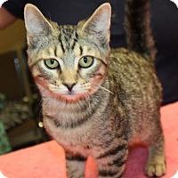 Adopt A Pet :: Otis - Cottageville, WV