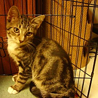 Adopt A Pet :: Twinkle - Bridgeton, MO