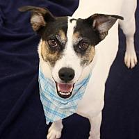 Adopt A Pet :: Newton (Manhattan) - New York, NY