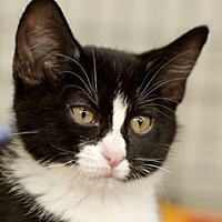 Adopt A Pet :: Billy - Great Falls, MT