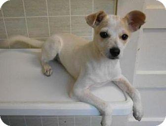 Terrier (Unknown Type, Medium) Mix Puppy for adoption in Bartonsville, Pennsylvania - RILEY