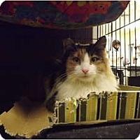 Adopt A Pet :: Shar Pei - Modesto, CA
