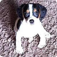 Adopt A Pet :: Buster - Encinitas, CA