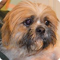 Adopt A Pet :: Marco - Prole, IA