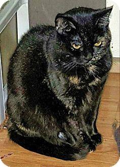 Calico Cat for adoption in brewerton, New York - Sahara