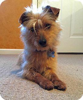 Terrier (Unknown Type, Medium) Mix Dog for adoption in Alpharetta, Georgia - Horace