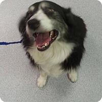 Adopt A Pet :: Sydney - Houston, TX