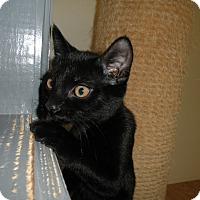 Adopt A Pet :: Skipper - Milwaukee, WI