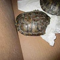 Adopt A Pet :: A069461 - Burbank, CA