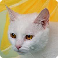 Adopt A Pet :: Kizzy - Englewood, FL