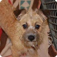 Adopt A Pet :: Chantilly - Newport, KY