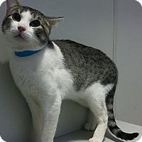 Adopt A Pet :: APPLE - Dallas, TX