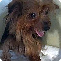 Adopt A Pet :: TWIX - Rossford, OH