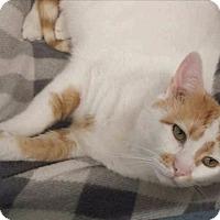 Adopt A Pet :: Deniro - Freeport, NY
