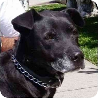Retriever (Unknown Type) Mix Dog for adoption in Berkeley, California - Pulga