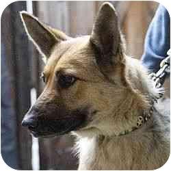 German Shepherd Dog Mix Dog for adoption in Berkeley, California - Noelle