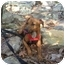 Photo 1 - Dachshund/Beagle Mix Dog for adoption in Woodstock, Georgia - Marko