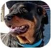 Rottweiler Dog for adoption in Hamilton, Ontario - Lola