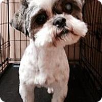 Adopt A Pet :: sadi - Wanaque, NJ