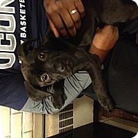 Adopt A Pet :: Jeffries - Manchester, CT
