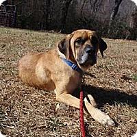 Adopt A Pet :: Turk (TN) - Asheboro, NC