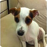 Adopt A Pet :: Zoe in Houston - Houston, TX