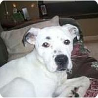 Adopt A Pet :: George - Alliance, NE