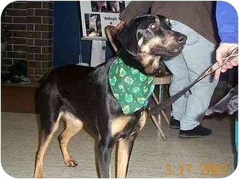 German Shepherd Dog Mix Dog for adoption in Owatonna, Minnesota - Daisy