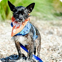 Adopt A Pet :: Kiki - Redondo Beach, CA