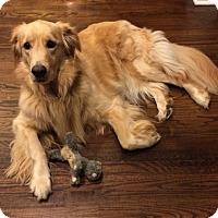 Adopt A Pet :: Siri - New Canaan, CT